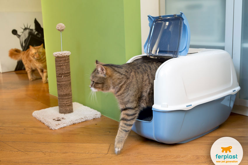 cats litter trays toilette prima cabrio פטשופטבע שירותים לחתול